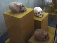 Group of ET Skulls in the Merida Museum - et influences mayans,mayan skull