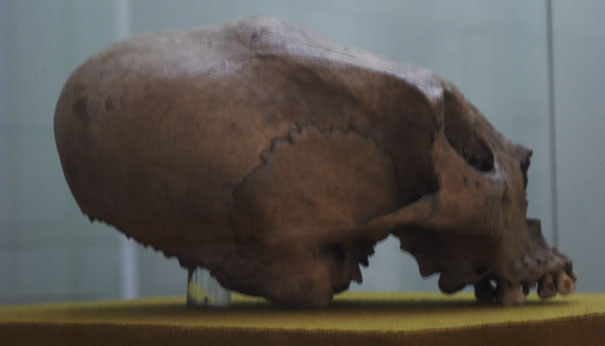 ET Skull in the Merida Museum - et influences mayans,mayan skull